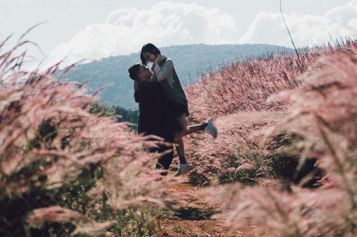 Đồi cỏ đuôi chồn hồng rực ở đà lạt
