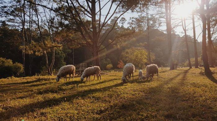 Hướng dẫn đường đi secret garden - sg newland đà lạt
