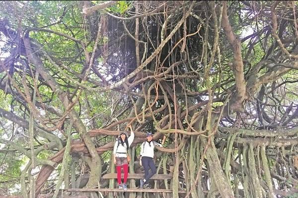 Thám hiểm rừng khộp Yok Don - KySuDuLich.com