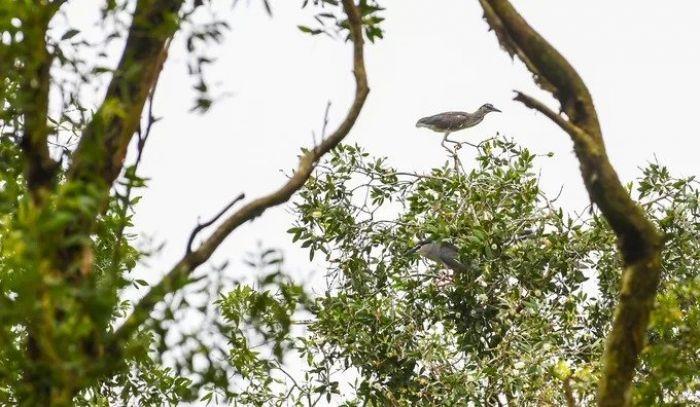 Bên trong rừng tràm Trà Sư mùa nước nổi - kysudulich.com