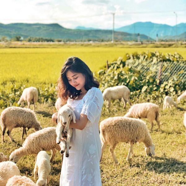 Hướng dẫn di chuyển đến đồng cừu suối tiên gần xịt Nha Trang