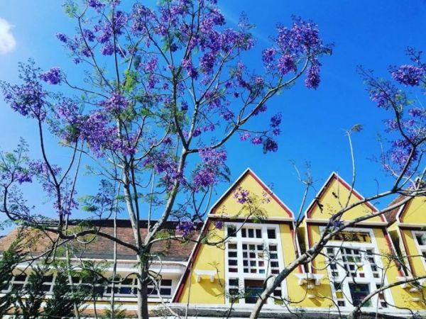 Cùng check-in Đà Lạt với hoa phượng tím đẹp mơ màng