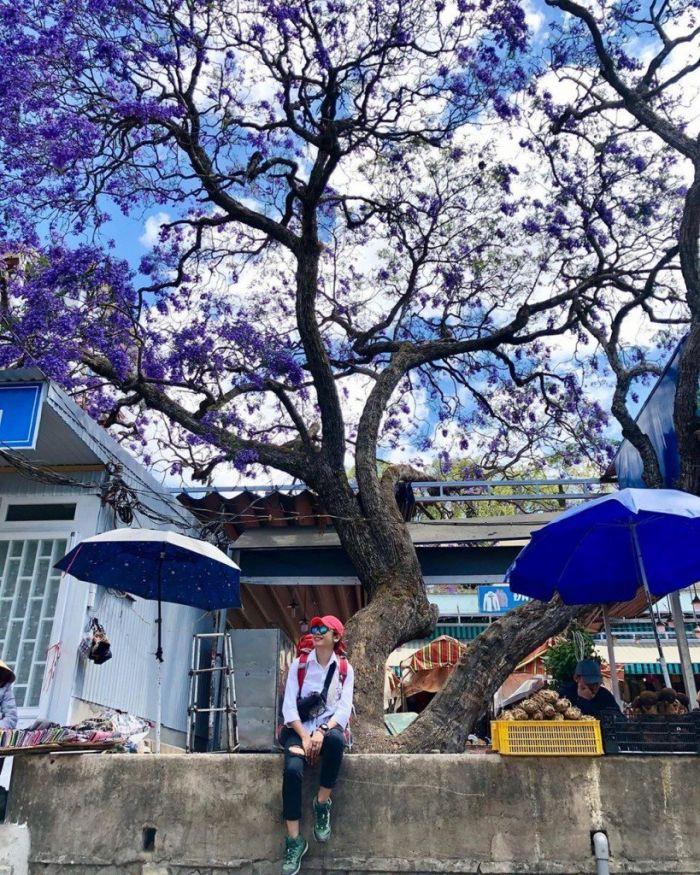 Check-in Đà Lạt ngắm hoa phượng tím đẹp mơ màng - kysudulich.com