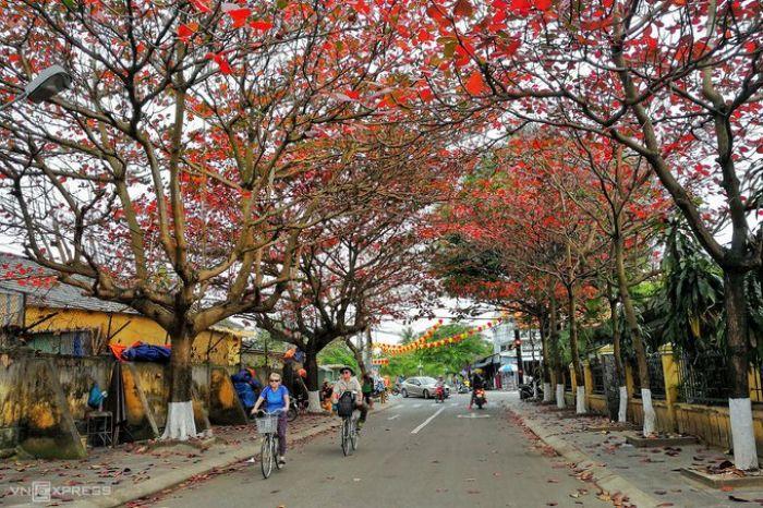 Hội An mùa cây bàng lá đỏ - kysudulich.com
