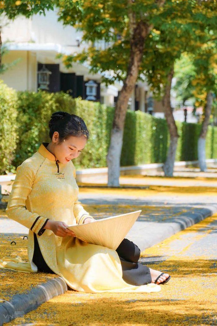 Phố Hội vàng rực hoa sưa - kysudulich.com