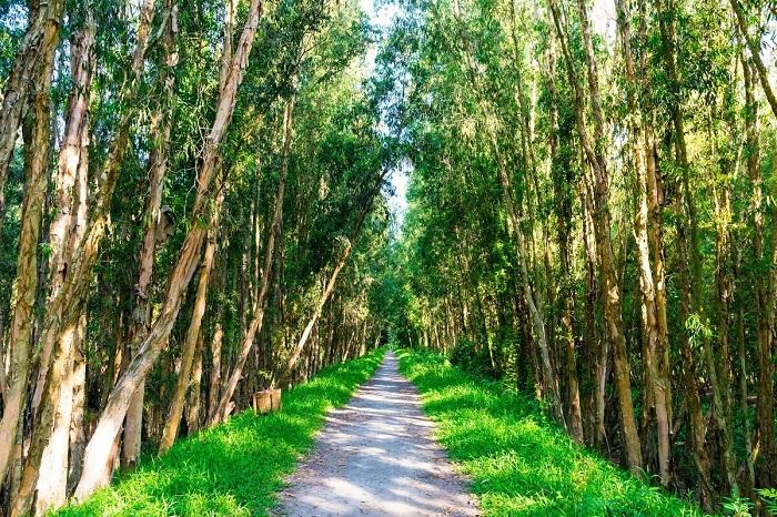 Khám phá nét đẹp hoang sơ tại rừng tràm Trà Sư