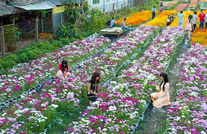 Du lịch vườn hoa Đà Lạt