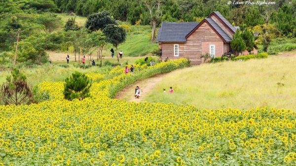Du lịch nhà vườn ở Đà Lạt - Địa chỉ của các nhà vườn và những điều cần lưu ý