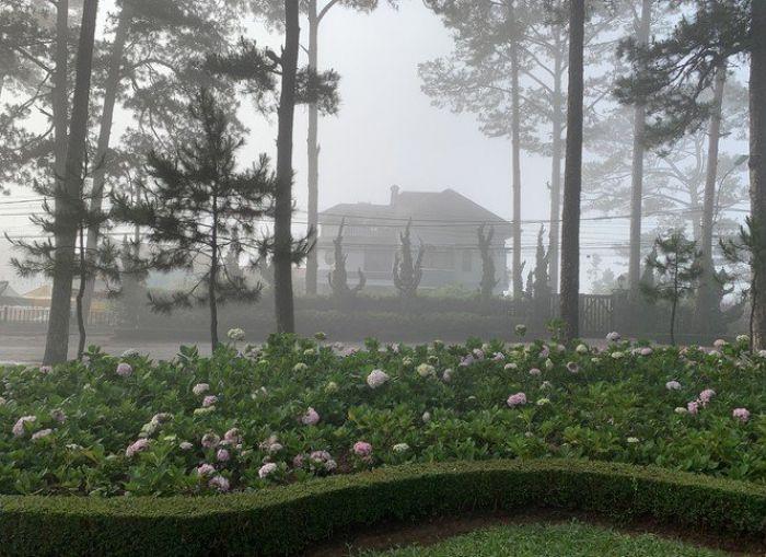 Bất ngờ Đà Lạt đẹp mê hoặc giữa 'biển sương', huyền ảo như chốn bồng lai - kysudulich.com