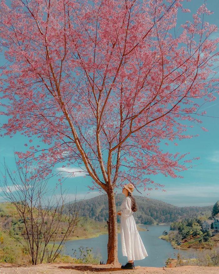 Đà Lạt thật đẹp vào cuối năm - kysudulich.com