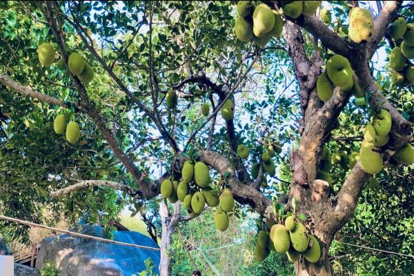 Mango House, homestay giữa lưng chừng núi view đẹp mê hồn trên đảo Hòn Sơn - kysudulich.com